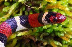 ... Animals on Pinterest Snapping turtle, Cichlids and Aquarium