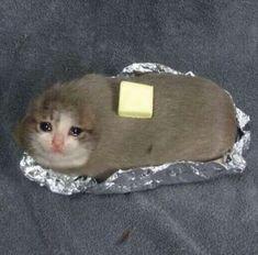 sad cat baked potato in foil Funny Animal Memes, Funny Animal Pictures, Cute Funny Animals, Funny Cute, Cute Cats, Hilarious, Sad Cat Meme, Cat Memes, Dankest Memes