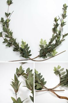 105 Best laurel wreath images | Watercolour, Botanical ...