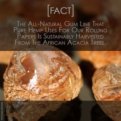 Did You Know That The All Natural Gum That #Pure Hemp Uses Is A Rare And Beautiful Wonder Of Nature? #TrueToItsRoots