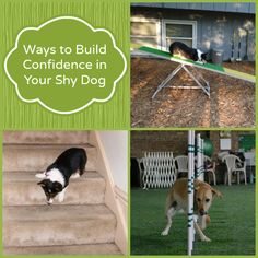 Ways to Build Confidence in Your Shy or Fearful Dog