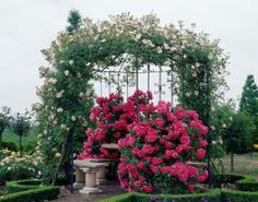 85679766480d1 54 Best Rosiers anglais images   Beautiful flowers, Beautiful roses ...