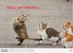 CATS ARE FABULOUS!!