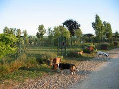 L'Asilo per Cani all'Accademia Cinofila Fiorentina