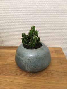 Petit pot cactus