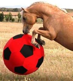 Horse Ball I would get one for my horses but I don't know if they would play with it!