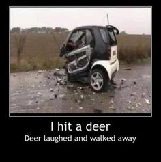 hit a deer....Been there Done that not fun..