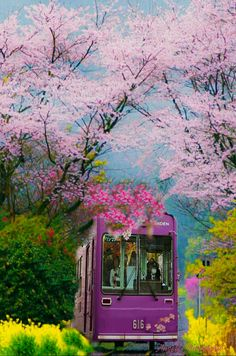 A beautiful commute near Tokyo Beautiful World, Beautiful Gardens, Spring Scenery, Cherry Blossom Japan, Japan Holidays, Trains, Visit Japan, Kyoto Japan, Cellphone Wallpaper