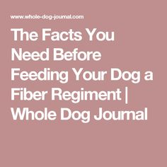 The Facts You Need Before Feeding Your Dog a Fiber Regiment | Whole Dog Journal