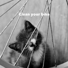...It is important! :) Have a great weekend everyone!⠀ ⠀ #cyclelikeagirl to share your stories and join the movement. ⠀ ⠀ #womenscycling #cycling #mtb #cyclocross #track #roadbike #bmx #triathlon #tri #tribike #qom #downhill #bike #strava #stravacycling #outdoorwomen #thisgirlcan #cyclingphotos #community #fixiegirls #yourrideyourrules #weekendrides #likeagirl #inspirationalwomen