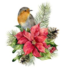 Imagem de Watercolor robin, poinsettia with Christmas floral decor. Hand painted bird and traditional flower and plants: holly, mistletoe, berries and fir branch isolated on white background. fotos, gravuras e fotografias stock. Christmas Squares, Christmas Bird, Christmas Flowers, Christmas Greenery, Merry Christmas, Xmas, Watercolor Projects, Watercolor Images, Watercolor Cards