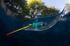 narwhals - Google Search