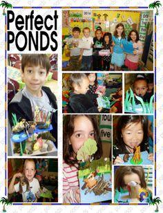 we did pond habitats Easter Plants, Pond Habitat, Habitats, Insects, Kindergarten, Science, Baseball Cards, Spring, Fun