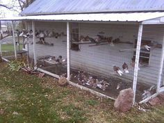 how to build a pigeon coop free