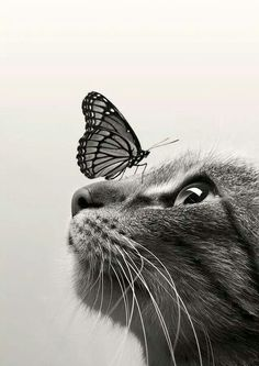 Beauiful Cat with Butterfly