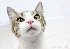 Photograph © copyright Marco Galli. Con Gatto Poldo by Galli Marco il fotografo dei gatti on 500px