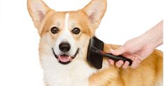 Get up to 40% #discount on Full Pet Grooming Services #onlinedeals #cashcashpinoy