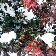 So plant your own gardens and decorate your own soul, instead of waiting for someone to bring you flowers . . . #vsco #vscocam #vscoua #vscoukraine #nature #instaweek #instanature #tumblr #winter #snow #poem #nature #witer #snow #flower #beauty #inspiration #colorful #tumblr #instagram #nature #vsco #spring