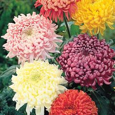 Flores que se pueden comer