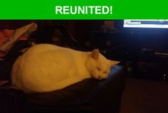 Great news! Happy to report that Cookie has been reunited and is now home safe and sound! :)