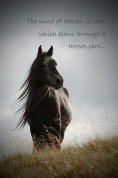 Horse quote, The wind of heaven is that which blows through a horses ears.