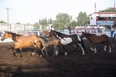 Medicine Hat Exhibition & Stampede Rodeo - Kesler Championship Rodeo Stock: 4 generations