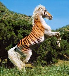 Just when I thought that weird part of Pinterest didn't exist Unusual Animals, Rare Animals, Animals And Pets, Funny Animals, Most Beautiful Horses, Pretty Horses, Animals Beautiful, Rare Horses, Wild Horses