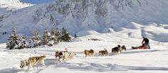 Traîneaux à chiens à Tignes - Activités d'hiver hors ski Savoie
