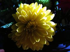 Cut flowers ~ original