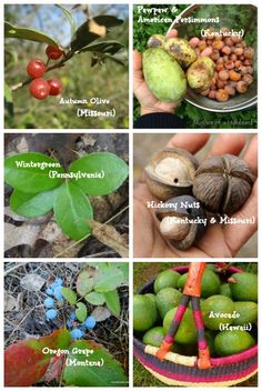 Foraging for wild fruits, nuts, and berries is an easy way to add to your larder for free. What's ripe in your region?? #wildcrafting #homestead
