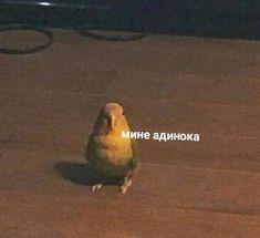 a parrot- попугай mine adinoka - Stupid Memes, Dankest Memes, Funny Memes, Hello Memes, Cool Pictures, Funny Pictures, Funny Parrots, Happy Memes, Russian Memes