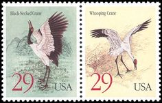 29c Black-necked and Whooping Crane . USA stamp 1994