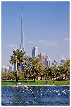Burj Khalifa as seen from Safa Park in Dubai.