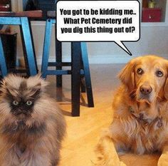 "* * CAT: "" I knows just enough to be dangerous. Smart-mouth dawg; I rearrange yer face fur dat remark."""