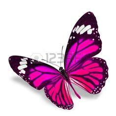Pink Mariposa volando aisladas sobre fondo blanco sombra, suave debajo. photo