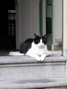 cat in amsterdam   Flickr - Photo Sharing!