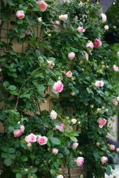 Every Rose, Shabby Chic Garden, Real Anime, Terrarium Plants, Growing Roses, Beautiful Flowers Garden, Flowering Vines, Climbing Roses, Green Garden