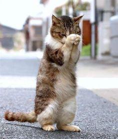 Oh dear God, please send me a mouse...