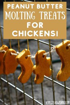Chickens And Roosters, Pet Chickens, Raising Chickens, Treats For Chickens, Backyard Birds, Chickens Backyard, Chicken Coop Plans, Chicken Coops, Peanut Butter Dog Treats