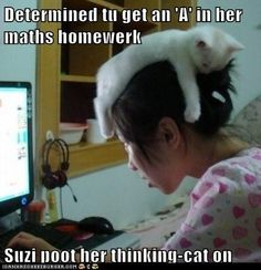 List of Funny Cat Pictures, Cute Cats, Cuddly Kittens. Updated every day with new pictures of cats. Page 2 Baby Animals, Funny Animals, Cute Animals, Funniest Animals, Wild Animals, Crazy Cat Lady, Crazy Cats, I Love Cats, Cute Cats