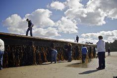 Massive dock, potentially tsunami debris, hits Oregon Coast