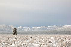 """""""Snowy Martis Valley 4"""" - Photograph of a lone tree in a snow covered Martis Valley in Truckee, California."""