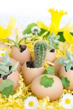 JOELIX.com | Urban Jungle Bloggers mini cactus in eggshell for easter