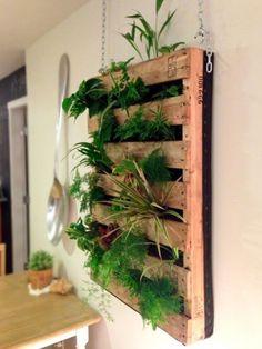 Leuk ook voor binnen! Al je planten bij elkaar in op de muur. Wel zo makkelijk met water geven....