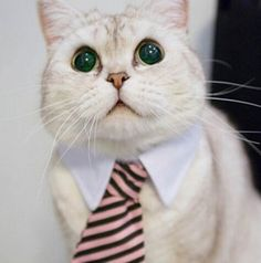 Enjoy this amazing tie with your cat . $9.99. #catslovers #petsaccessories #tie