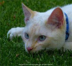 Ben my Cat By Cyril Furman LPSSA Racing, My Style, Cats, Nature, Photography, Animals, Running, Gatos, Naturaleza