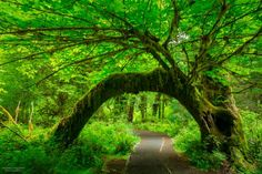 We've got a beautiful rainforest right here in Washington.