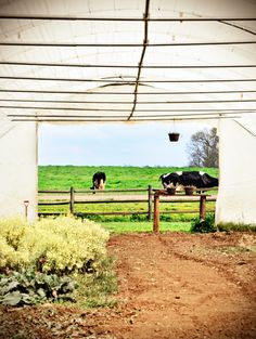 Hoffner Organic Farms    ...photo credit: me :)