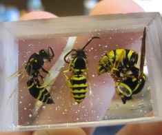 How To Encapsulate Insects In Resin