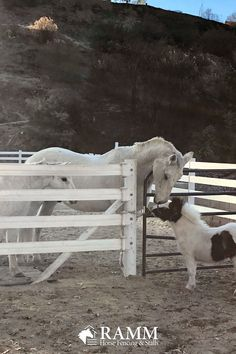 RAMM's exclusive 525 Plus Flex Fence® will provide you with a prestigious white board fence appearance with safety and flexibility in mind for your horses and livestock. Let's not forget to mention it comes with a Lifetime Limited Warranty! #rammfence #flexfence #rammprojects #horsefence #vinylfence #horses #equine